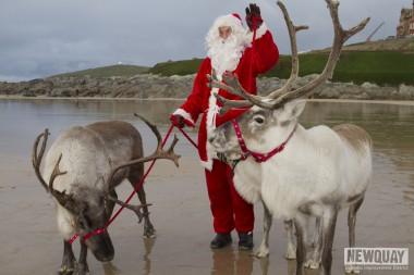 Fistral reindeer1